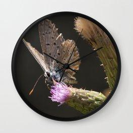 Posing butterfly Wall Clock