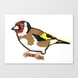 Goldfinch - European Goldfinch Canvas Print
