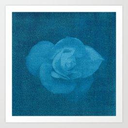 White Flower in Blue Art Print