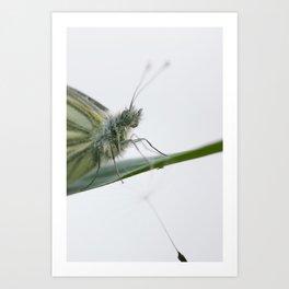 Butterfly dandelion Art Print