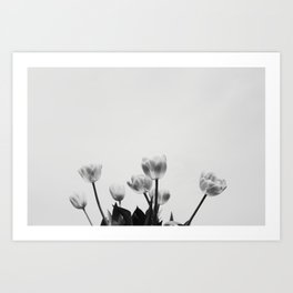 Black & White Tulips Art Print
