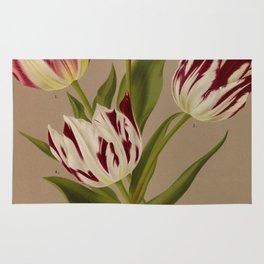 Arendsen, Arentine H. (1836-1915) - Haarlem's Flora 1872 - Single Early Tulips 5 Rug