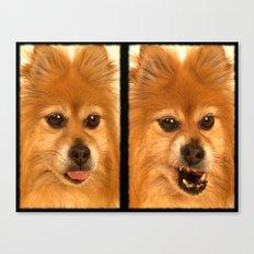 Pomeranian dog (slightly distorted like her personality) lol Canvas Print