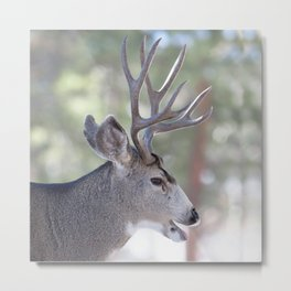 Watercolor Deer, Mule 03, RMNP, That's a Good One Metal Print