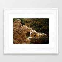 cuddle Framed Art Prints featuring Cuddle by Lindsey Hart Photography