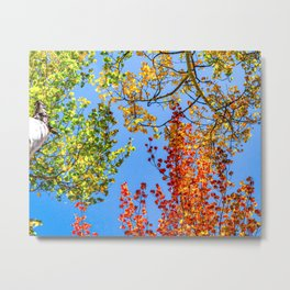 Aspen Color Candy // Green Yellow Red and Orange Fall Leaf Colors Metal Print