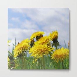 #summer #yellow #Dandelion #meadow Metal Print