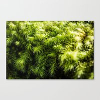 moss Canvas Prints featuring Moss by Michelle McConnell