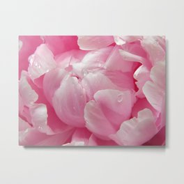 Glorious pink peony with dew drops floral photography Metal Print