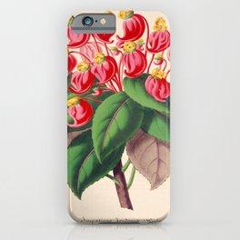 Impatiens gordonii Vintage Botanical Floral Flower Plant Scientific Illustration iPhone Case