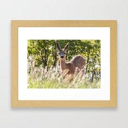 Mule Deer Framed Art Print