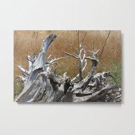 Tanglewood Metal Print
