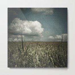 wheat field in summer Metal Print