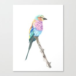 Lilac Breasted Roller - Colored Pencil Canvas Print