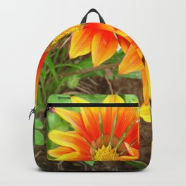 Three Bright Colored Gazania Flowers and Garden Backpack