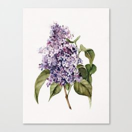 Lilac Branch Canvas Print