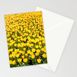 Plenty red and yellow Stresa tulips Stationery Cards