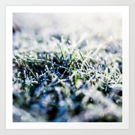 Frosty Morning 1 Art Print
