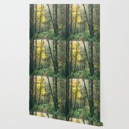 Forest Bathing Wallpaper
