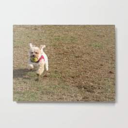 Copper running at the park Metal Print