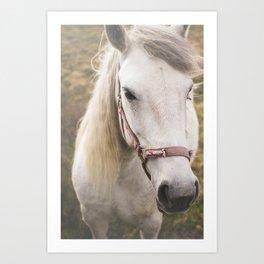 Meditating Horse Art Print
