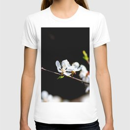 Nice White Japanese Apricot Flower Against The Black Background T-shirt