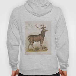 Vintage Illustration of a Round Horned Elk (1872) Hoody