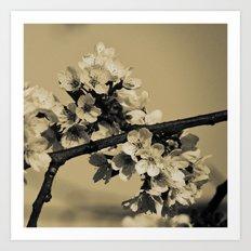 Bloom #2 Art Print
