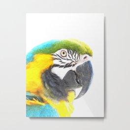 Macaw portrait Metal Print