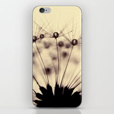 dandelion - droplets of mocha iPhone & iPod Skin