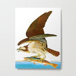 Osprey Bird Metal Print