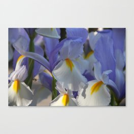 Irises in Blue and White Canvas Print