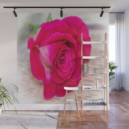 White Rose with Pink Tips Wall Mural