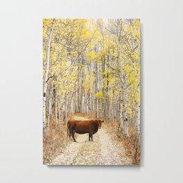 Cow in aspens Metal Print
