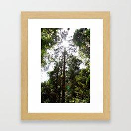 Hoop pine Framed Art Print