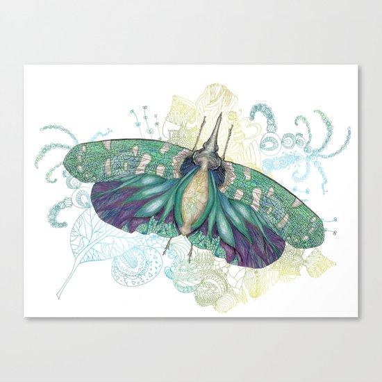 Hotinus Maculatus  Canvas Print