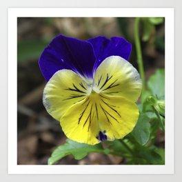 Vivid Viola Art Print