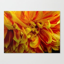 Colors In Bloom 23 Canvas Print
