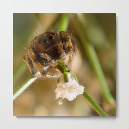 Flower for You! Metal Print