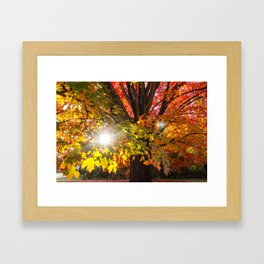 Fall Foliage - Chester, Virginia Framed Art Print