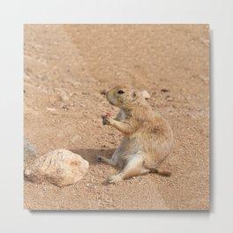 Prairie Dog Snack Time Metal Print