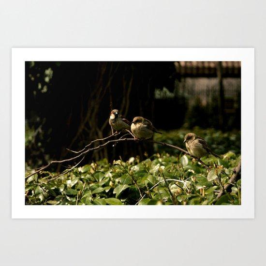 Birds of a Feather. Art Print