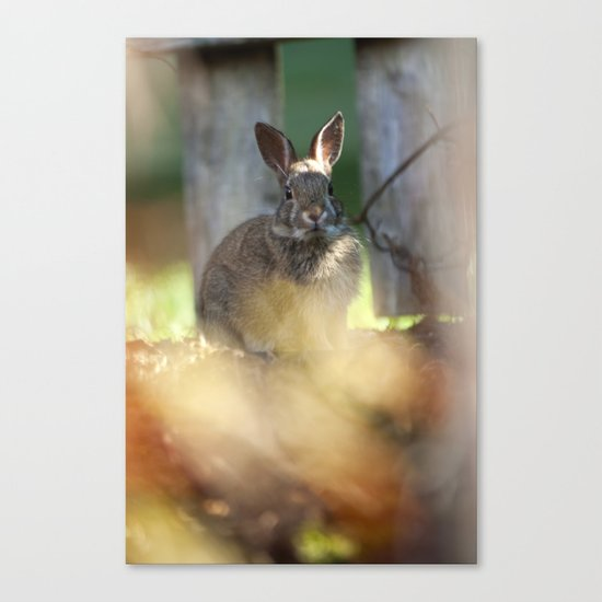 Backyard Friend Canvas Print