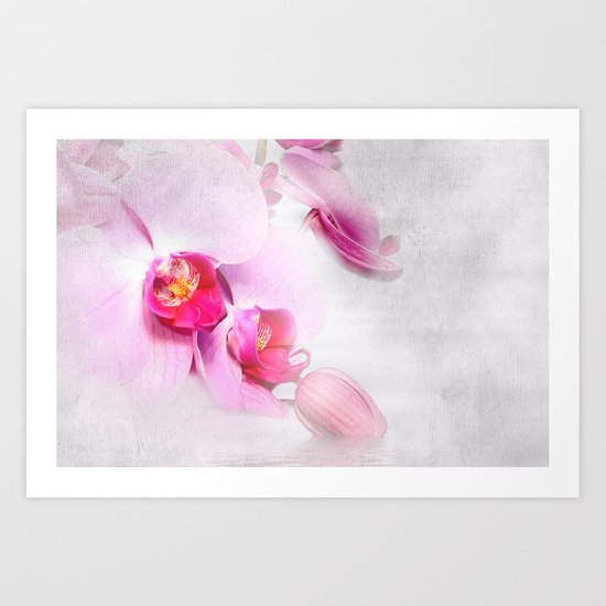 Colurful Orchid Art Print