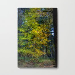 Autumnal Woodland Metal Print