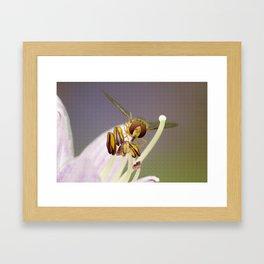 Hover on a Flower Framed Art Print