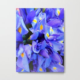 Blue Iris flowers Metal Print