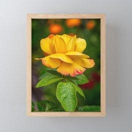 Garden Rose Framed Mini Art Print