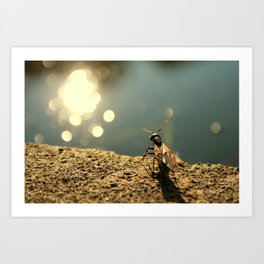 Pond Watcher Art Print