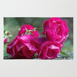Lying roses covered by raindrops Rug